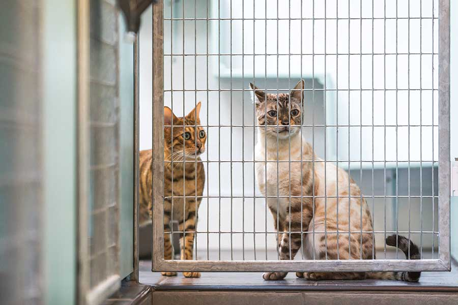 About us and our cattery