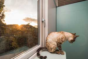 Cattery Stroud Gloucestershire